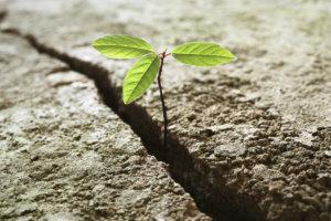 Resilienza umana